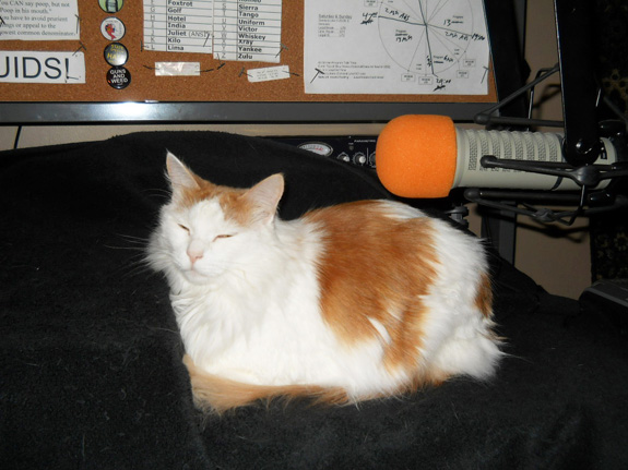 1 - Peanut in repose with Electro-Voice RE-20 microphone